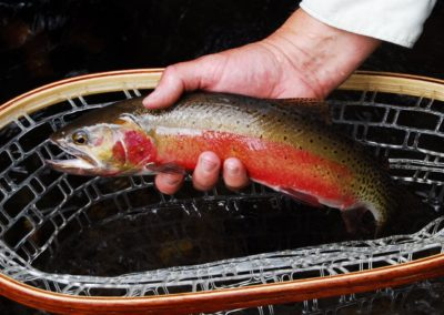 Native Trout_Lakefork Cutthroat Beauty